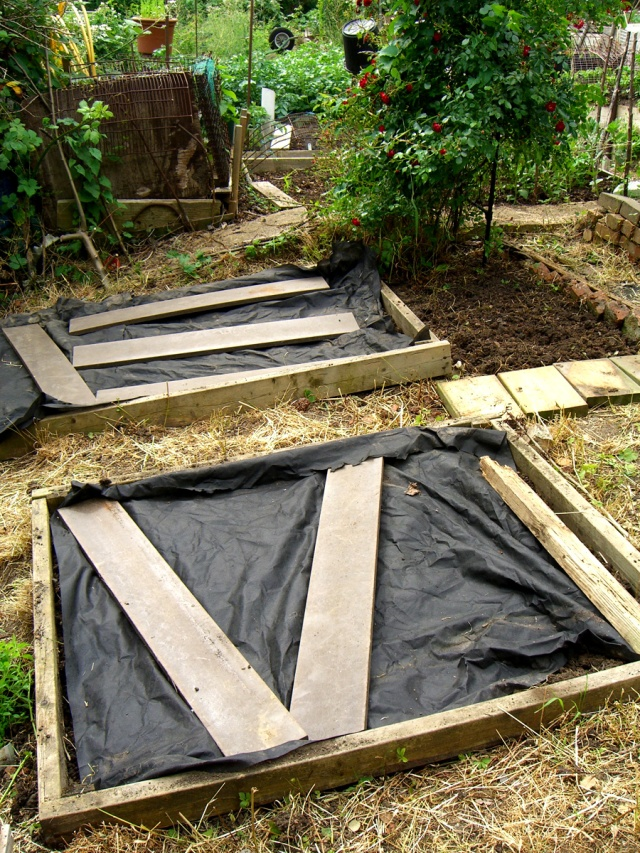allotment-beds