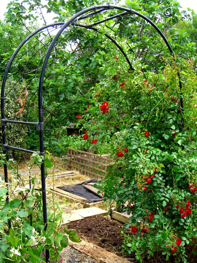 allotment-trellis-beds-gurad