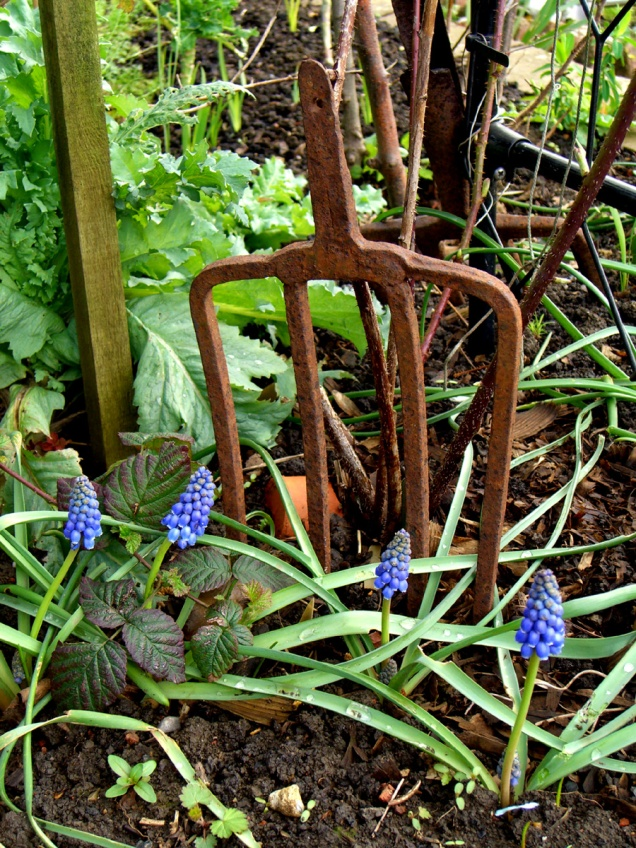 allotment-fork+smallflowers1