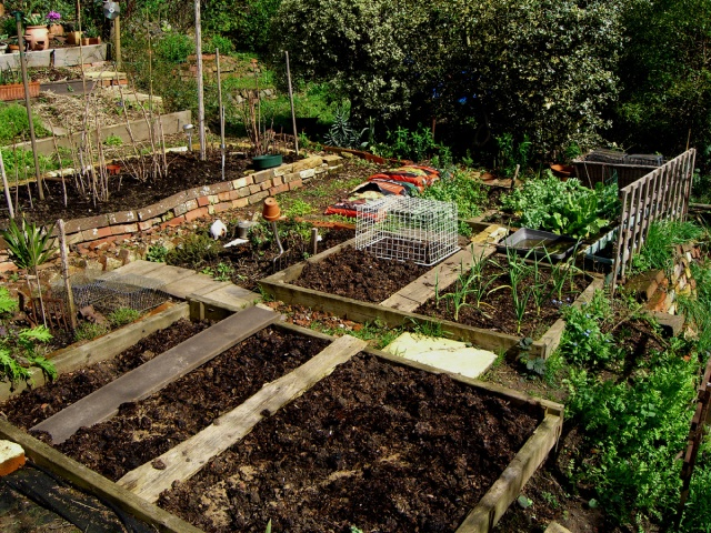 Allotment-fullviewnorth-2