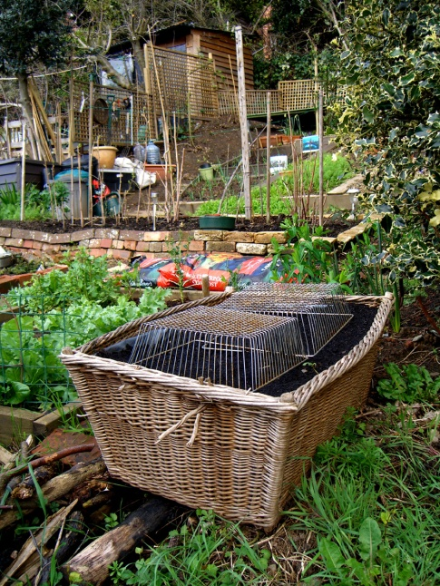 allotment-hamper1