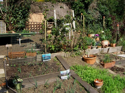 Allotment-Mar24-