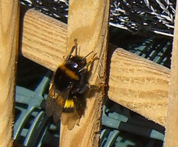Untitled-1 copyallotment-bee-trellis