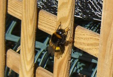 Untitled-1 copyallotment-bee-trellis