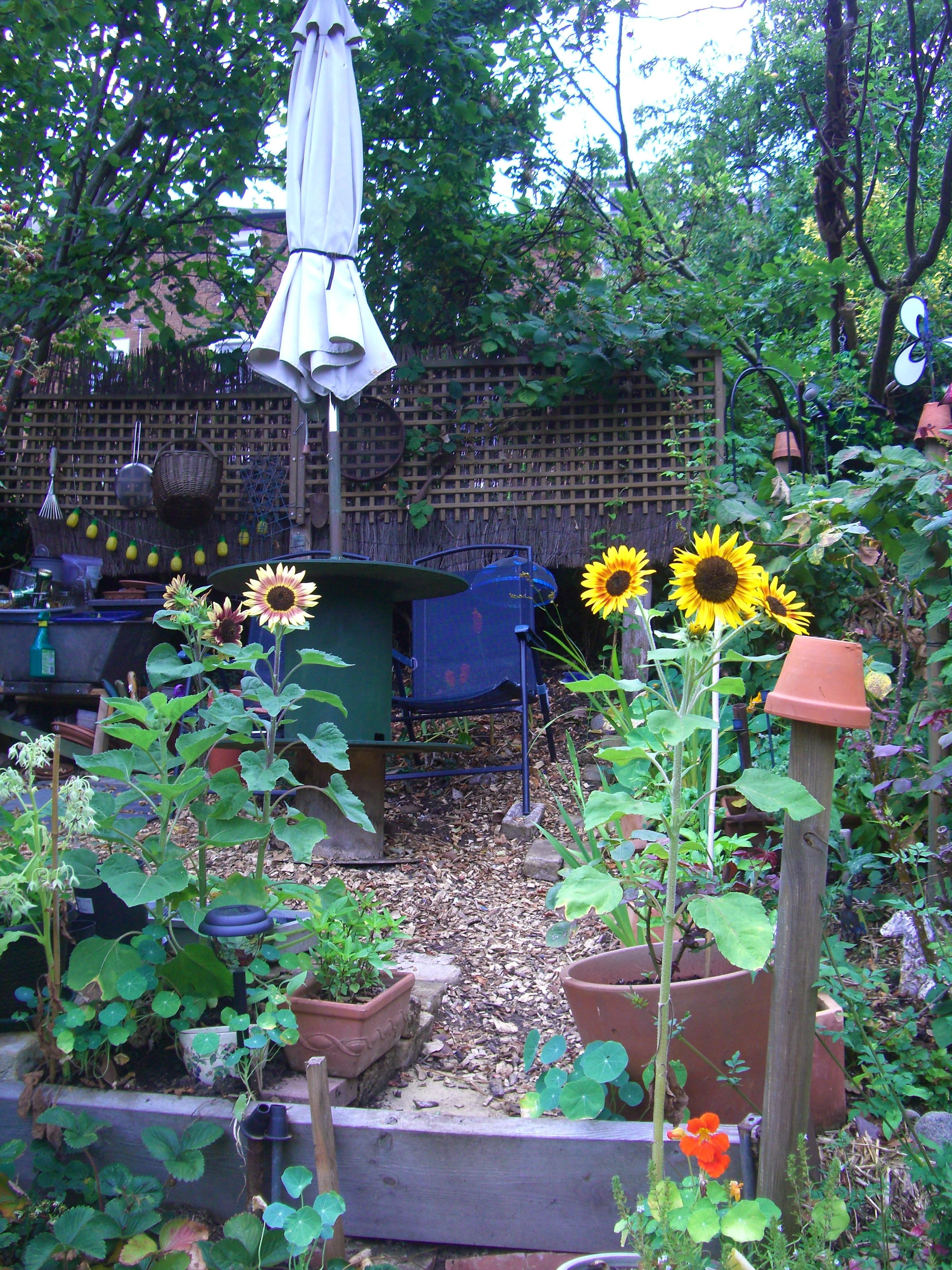 SunflowersOnTopPlot